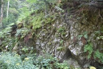 Blick auf einen nach rechts aufsteigenden Waldhang mit teils offenliegendem, teils überwuchertem Gestein. Das blockhafte, hellgraue Gestein weist Kerben und schräg verlaufende Sprünge auf. Unter dem Bewuchs sind Farne und Moos erkennbar.