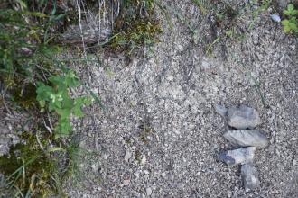 Nahaufnahme von hellgrauem, feinkörnigem Gestein. Rechts unten liegen vier größere, scharfkantige Stücke. Links im Bild und oben wachsen Pflanzen sowie Moos.