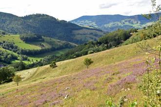 Blick über einen schräg nach links abfallenden, zum Vordergrund hin welligen Wiesenhang auf im Hintergrund verteilte bewaldete Berge.