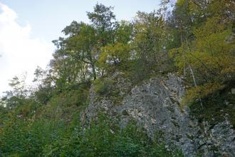 Blick auf einen teilweise stark überwucherten Gesteinsaufschluss. Das Gestein tritt an einem nach links abfallenden, oben bewaldeten Hang zutage.