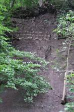 Vorderansicht eines steilen, aus violettgrauem Bodenmaterial bestehenden Waldhanges. Im Hang sind auch waagrecht verlaufende, helle Gesteinsstreifen eingebettet. Teilweise ist der Blick auf den Hang von Bäumen, Ästen und Blättern verstellt.