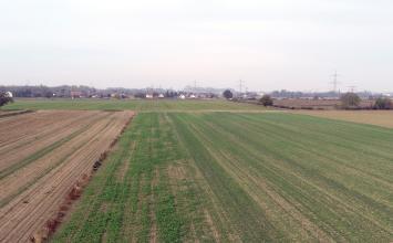 Von weiter oben blickt man über flache Äcker, auf denen zum großen Teil junges Grün wächst. Im Hintergrund eine Siedlung und Bäume.