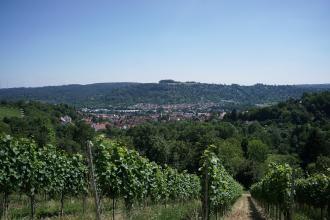 Der Blick geht abwärts über steile Rebhänge auf ein ausgedehntes Waldgebiet. Dahinter, vor einem bewaldeten Berg, liegt im Tal eine größere Siedlung.