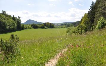 Ein schmaler Fußweg führt durch eine blühende Wiese nach rechts auf einen Wald zu. Dahinter liegt links eine gemähte Wiese sowie weiterer Wald. Im ferneren Hintergrund erhebt sich links ein bewaldeter Bergkegel