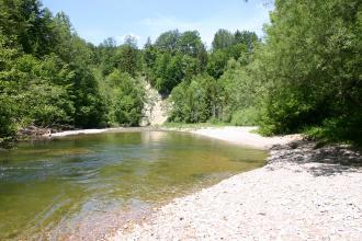 Das Bild zeigt einen auf den Betrachter zukommenden Fluss mit kiesigem, in der Sonne liegendem Ufer rechts sowie Bäumen im Hintergrund.