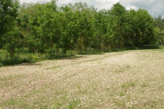 Blick auf einen leicht nach links abfallenden, steinigen Acker mit dünnem Pflanzenwuchs. Den Acker säumt eine dicht stehende Gruppe von Laubbäumen.