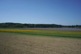 Blick auf eine flache Landschaft mit Acker, blühender Wiese, Schilf und einem schmalen, langgestreckten See. Dahinter bewaldete Höhenrücken, nach links ansteigend.
