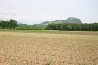 Das Bild zeigt breite kiesige Ackerflächen mit jungen Grünpflanzen, begrenzt von Waldstreifen. Im Hintergrund ein bewaldeter Felsenberg mit Burgruine.
