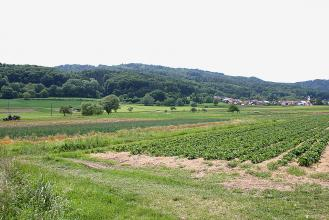 Blick über eine flache, bepflanzte Ackerlandschaft. Nach links hin steigen bewaldete Höhen an.