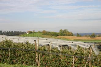 Blick auf eine mit Netzen gesicherte Apfelplantage. Im Hintergrund Hügelland mit weiteren Obstanbaufeldern.