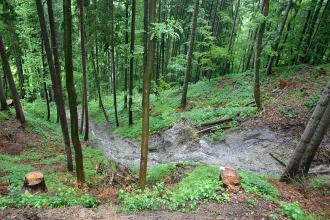 Von erhöhtem Standort aus überblickt man einen in einem Wald gelegenen Steilhang. Ein schmaler Bach fließt, von rechts kommend, abwärts.