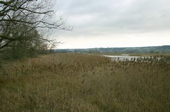 Blick über hochstehende Riedgräser auf einen See. Im Hintergrund flache, bewaldete Hügel.