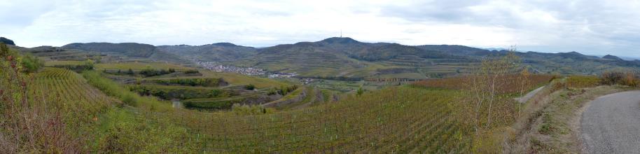 Panoramaansicht ausgedehnter Rebterrassen, die sich vom Vordergrund bis zum bergigen Hintergrund erstrecken. Links, in einem Taleinschnitt, ist noch eine kleine Siedlung erkennbar.