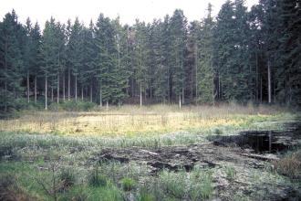 Das Bild zeigt ein dunkles, mit Bewuchs bedecktes Gewässer im Vordergrund. Dahinter ist ein heller, gelbgrüner Landstreifen sichtbar, an den sich eine Reihe dunkler Nadelbäume anschließt.