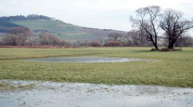 Auf einer weiten, ebenen Grünlandfläche hat sich ein kleiner See gebildet. Auch im Vordergrund steht Wasser. Links im Hintergrund erhebt sich ein landwirtschaftlich genutzter, auf der Kuppe bewaldeter Hügel.