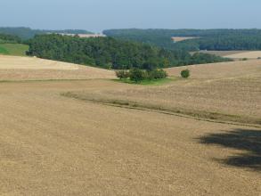 Das Bild zeigt wellige, abgeerntete Ackerflächen, die teils durch schmale Gräben voneinander getrennt sind. Im Mittelgrund steht eine inselartige Baumgruppe. Dahinter erheben sich mehrere bewaldete Hügel; durchsetzt von weiteren Äckern.