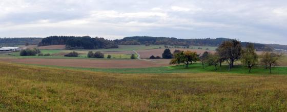 Blick auf eine leicht gewellte Ackerlandschaft mit einzelnen Bäumen und einer Baumgruppe rechts. Die Hügel im Hintergrund sind bewaldet.