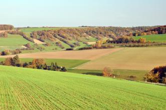 Auf einen nach rechts abfallenden, begrünten Acker folgen in der Bildmitte weitere, nach rechts ansteigende Ackerflächen. Den Abschluss bildet ein Gegenhang links; mit Wald, Hecken und Steinhügeln.