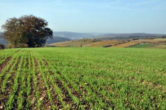 Blick über einen hoch gelegenen, mit frischem Grün bepflanzten, steinigen Acker auf eine hügelige, teils bewaldete Landschaft.