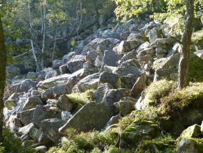 Auf einem von rechts nach links abfallenden Waldhang liegen zahlreiche größere Steinblöcke eng auf- und nebeneinander.