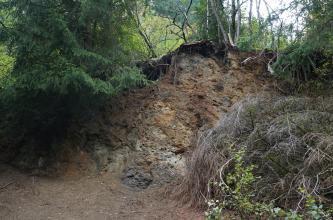 Zwischen Nadelbäumen links und Sträuchern rechts ist hier eine halbrund geformte, aufgeworfene Bodenerhebung sichtbar, mit aufgeschlossenem Boden- und Gesteinsmaterial.