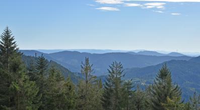 Blick von erhöhtem Standort über einen nach links ansteigenden Wald auf zahlreiche bewaldete Berge, die bis zum Hintergrund reichen. Links am Bildrand steht auf einem dieser Berge ein Turm.