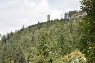 Aufwärts gerichteter Blick auf einen leicht gerundeten, nach rechts aufsteigenden bewaldeten Bergrücken. Oberhalb der Bildmitte, am Rand der Bergkuppe, steht ein Aussichtsturm.