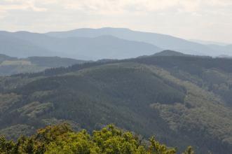 Blick über Baumwipfel auf mehrere bewaldete Bergrücken. Im Hintergrund ragen weitere, entferntere Höhen auf.