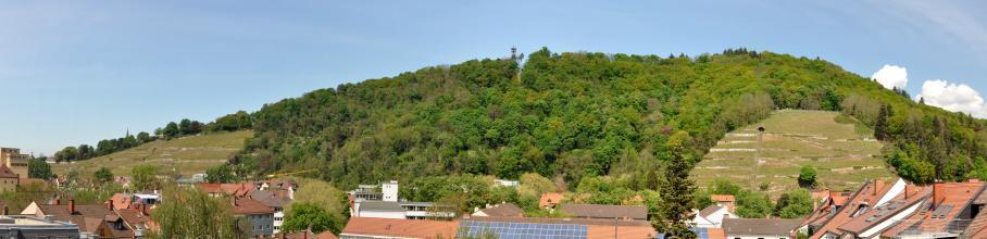 Panoramablick über rote Hausdächer auf einen langgestreckten, größtenteils bewaldeten Bergrücken. Die freien Stellen des Berges sind terrassierte Rebanlagen. Rechts, oberhalb der Bildmitte, ist ein Aussichtsturm erkennbar.