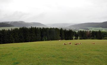 Blick auf eine hochgelegene Wiese mit angrenzendem Waldgürtel. Auf der Wiese weiden mehrere Kühe. Hinter dem Wald sind mehrere bewaldete Bergrücken erkennbar, die sich teilweise in grauem Dunst verlieren.