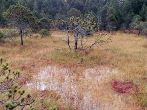 Das Bild zeigt eine vor Wald liegende, gelblich braune Schilf- und Grasfläche. Im Vordergrund steht Wasser. Im Mittelgrund ragen einzelne Bäume aus dem feuchten Boden.
