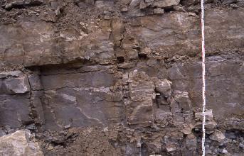 Detailaufnahme einer Abbauwand eines Steinbruchs. Das anstehende Gestein ist dunkelrot und bankig. Rechts vor dem Aufschluss befindet sich ein etwa 3 m langer Maßstab.
