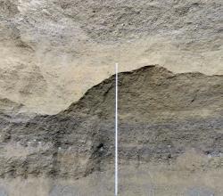 Nahaufnahme der Abbauwand einer Kies- und Sandgrube. In der Mitte der Wand verläuft eine gebogene Linie, die hellbraune Schichten oben von dunkelgrauen unten trennt. Eine Messlatte reicht bis zum höchsten Punkt des Bogens.