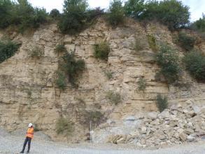 Blick auf eine Abbauwand eines Steinbruchs. Das anstehende Gestein ist hellbeige, die Wand ist teilweise von Pflanzen bewachsen. Links vor der Wand steht ein Mensch in orangener Warnweste.