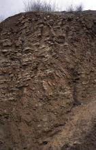 Blick auf eine Abbauwand eines Steinbruchs. Das dunkelrote bis braune Gestein ist dünnbankig und in der Bildmitte überschoben.