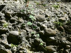 Nahaufnahme von verbackenen Kieselsteinen und Pflanzenwuchs sowie, in der unteren Hälfte, größeren Steinen.