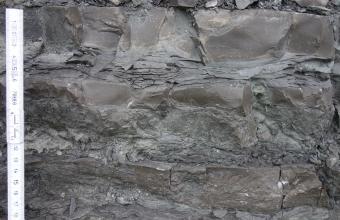 Detailaufnahme eines graubraunen bis dunkelgrauen Gesteins. Das Gestein ist sehr dicht und teilweise splittrig gebrochen. Am linken Bildrand befindet sich ein Maßstab.