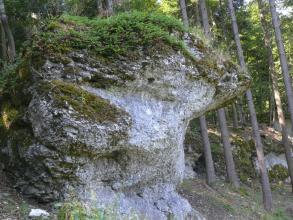 Das Foto zeigt einen großen, markanten Felsen an einem Waldhang. Das weißlich graue Gestein ist links und oben bemoost und bewachsen. Rechts verläuft ein spitzer Vorsprung, der einer Nase ähnelt.