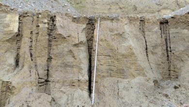 Nahaufnahme einer feinkörnigen, hellbraunen bis grauen Gesteinswand mit senkrechten Rissen und Klüften. In der Bildmitte wurde eine Messlatte angebracht.
