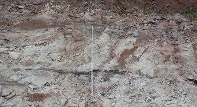 Frontalansicht einer hellgrauen bis rötlichen Steinbruchwand. Oben ist das Material teilweise scherbig. In der Bildmitte ist eine Messlatte angelehnt.