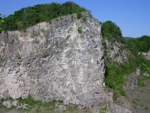Blick auf einen mehrere Meter hohen Aufschluss aus grauem Gestein mit unruhiger Oberfläche. Rechts neben der Aufschlusswand sowie darüber wachsen kräftig grüne Büsche.
