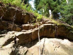Blick von links unten auf einen Aufschluss aus bräunlich-grauem, tektonisch deformiertem Gestein. Über dem Aufschluss wächst Gras, im Hintergrund sind Bäume zu sehen.