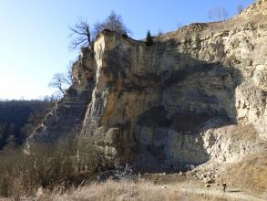 Blick auf eine Abbauwand eines stillgelegten Steinbruchs. Der anstehende Kalkstein ist hell und dickbankig, die mehrere Zehnermeter hohe Wand ist teilweise bewachsen.