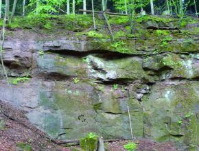 Blick auf eine alte Abbauwand eines Steinbruchs im Wald. Das anstehende Gestein ist violettrot und großflächig mit Moos bewachsen bzw. grünlich und weißlich angewittert. Vor der Wand liegt Laub, über der Wand wachsen Bäume.