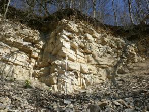 Gebankte, feinkörnige Kalksteine der Wohlgeschichtete-Kalke-Formation