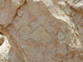 Detailaufnahme eines Massenkalksteins