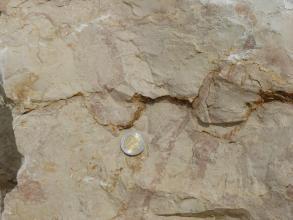 Nahaufnahme eines hellen Kalksteins, durch welchen sich quer eine Kerbe zieht. In dem Kalkstein sind einige dunklere und unförmige Flecken zu erkennen. In der Bildmitte liegt auf dem Kalkstein eine Münze als Maßstab.