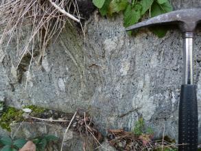 Nahaufnahme eines Gesteinaufschlusses. Das Gestein ist mittelgrau mit mehreren Nestern aus hellgrauem Gestein. Über und unter dem Aufschluss sind Pflanzenteile zu erkennen. Am rechten Bildrand ist ein Hammer als Maßstab.