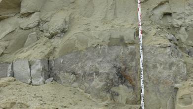 Nahaufnahme einer Abbauwand in einer Tongrube. In dem gelblich-grauen Ton ist eine Schicht aus mittelgrauem, sandigen Material zwischengeschaltet. Rechts verläuft ein Maßstab vertikal durchs Bild.