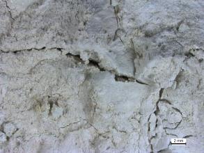 Nahaufnahme einer weißen Erde, welche einige, kreuz und quer verlaufende Risse aufweist. Rechts unten befindet sich ein Maßstab.